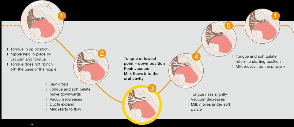 Infant sucking | Research | Medela